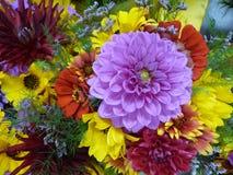 Chrysanthemen und Dahlien Lizenzfreies Stockfoto