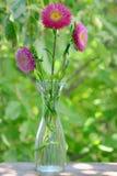 Chrysanthemenblume Stockbilder
