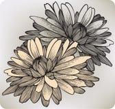 Chrysanthemenblume, Handzeichnung. Vektor illustr Lizenzfreies Stockbild