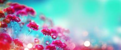 Chrysanthemenblumen, die in einem Garten blühen Schönheitsherbstblumen lizenzfreie stockfotografie