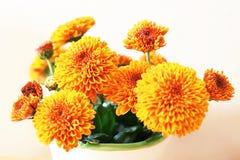 Chrysanthemenblumen im Topf Lizenzfreies Stockfoto