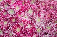 Chrysanthemenblumenstraußmuster Lizenzfreie Stockbilder