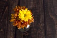Chrysanthemengänseblümchen Lizenzfreie Stockfotos