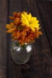 Chrysanthemengänseblümchen Stockbilder