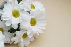 Chrysanthemenkamille weiße Blumen-Blumenstrauß über neutralem beige Hintergrund mit Kopienraum stockfoto