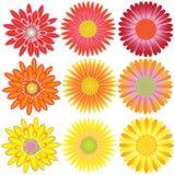 Chrysanthemu rossastro Fotografie Stock Libere da Diritti