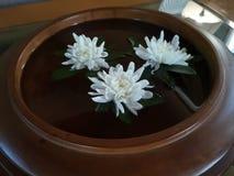 chrysanthemumbeautifulinwater罐群 免版税图库摄影