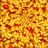 Chrysanthemum. Dendranthema Des Moul - background royalty free stock image