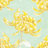 Chrysanthemum. Yellow vintage chrysanthemum on light green background Stock Photos