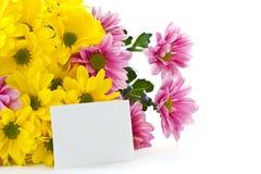 Chrysanthemum Royalty Free Stock Image