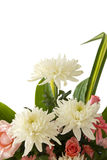 Chrysanthemum. 3 chrysanthemum flowers.Chrysanthemum with drops of water,White chrysanthemum  on white Royalty Free Stock Photo