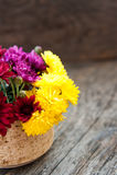 chrysanthemum imagem de stock