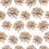 chrysanthemum ilustração royalty free