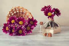 Chrysanthemum in basket on wooden table. Still life with chrysanthemums. Art work Royalty Free Stock Photography