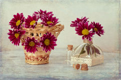 Chrysanthemum in basket on wooden table. Still life with chrysanthemums. royalty free stock photography