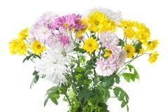 Chrysanthemum bouquet Stock Photography
