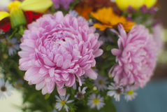 Chrysanthemum Bouquet. Beautiful Chrysanthemum Bouquet. Selective focus Stock Image
