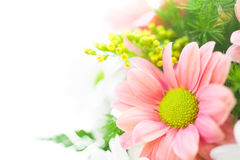 Chrysanthemum bouquet close-up. Chrysanthemum bouquet detail on white background Stock Image