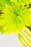 Chrysanthemum bouquet close up Stock Photography