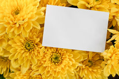 Chrysanthemum bouquet with copy space. Chrysanthemum Floral bouquet background with blank greeting card to insert your marketing message or florists branding Stock Image