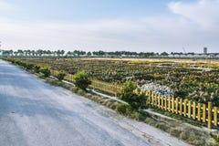 Chrysanthemum breeding base Stock Images