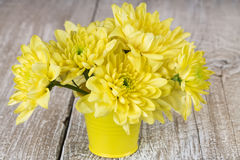Chrysanthemum in a bucket Stock Images