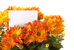 Chrysanthemum with a card Stock Photo