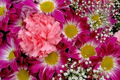 Chrysanthemum and carnation flowers. Royalty Free Stock Images