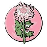 Chrysanthemum clip art Stock Photo