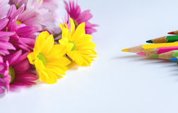 Chrysanthemum with color pencil Royalty Free Stock Images