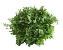 Free Chrysanthemum Coronarium Royalty Free Stock Photography - 35629307