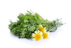 Chrysanthemum coronarium on white background. The Chrysanthemum coronarium on white background Stock Photography