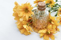 Chrysanthemum daisy flower essential oil tincture. Chrysanthemum daisy flower essential oil tincture bottle on the white wooden table background. Herbal royalty free stock photos