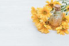 Chrysanthemum daisy flower essential oil tincture. Chrysanthemum daisy flower essential oil tincture bottle on the white wooden table background with copy space stock photos