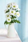 Chrysanthemum daisy Royalty Free Stock Photography