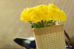 Chrysanthemum, dendranthemum yellow flower on bamboo bucket Stock Image