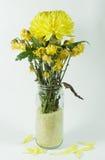 Chrysanthemum and died chrysanthemum on background Stock Photos