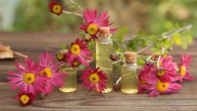 Chrysanthemum essential oil in  bottle on table stock video