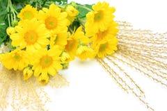chrysanthemum et herbe des pampas Images libres de droits