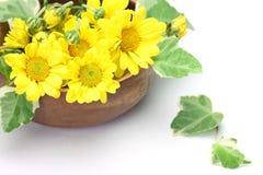Chrysanthemum et lierre Images libres de droits