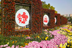 Chrysanthemum exhibition Royalty Free Stock Image