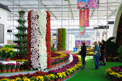 Chrysanthemum Exhibition. In Nanjing Agricultural University Lake cooked flower base Royalty Free Stock Photos