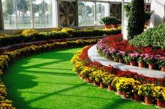 Chrysanthemum Exhibition Stock Photos