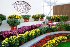 Chrysanthemum Exhibition Royalty Free Stock Photos