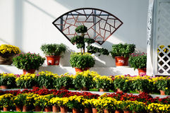 Chrysanthemum Exhibition Royalty Free Stock Photo