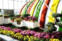 Chrysanthemum Exhibition Royalty Free Stock Image