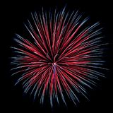 Chrysanthemum Fireworks Burst. Red,white and blue Chrysanthemum burst Royalty Free Stock Images