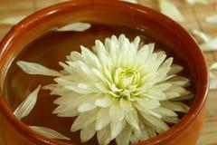 Chrysanthemum floating in bowl Royalty Free Stock Image