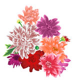 Chrysanthemum flower bouquet isolated. Tender Chrysanthemum flower bouquet isolated. Vector illusrtation Stock Image