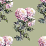 Chrysanthemum flower, bouquet, watercolor, pattern seamless Stock Image
